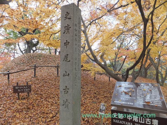 20130121_中尾山古墳