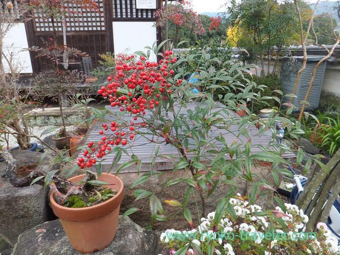 20130121_川原寺の庭1