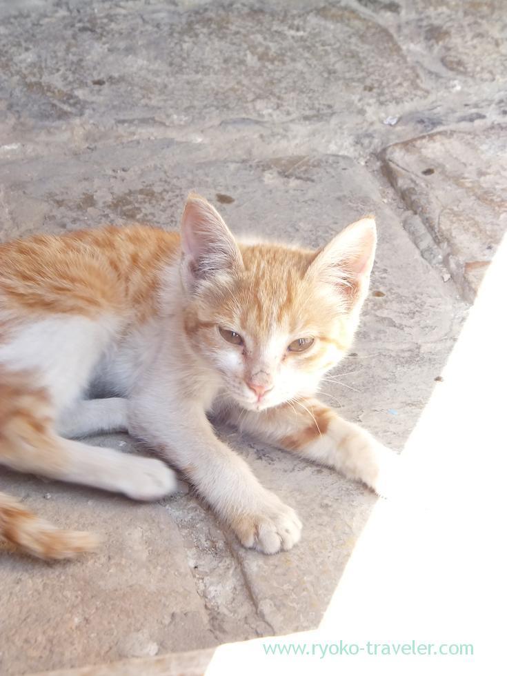 4日目・シャーヒズィンダ廟群でみつけた子猫
