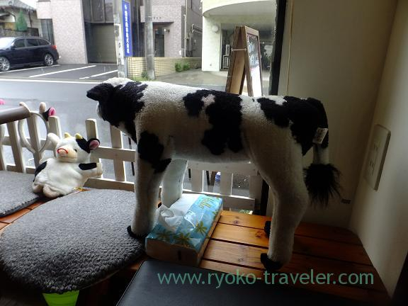 Cow looks at the window, Marufuku Farm (Funabashi)