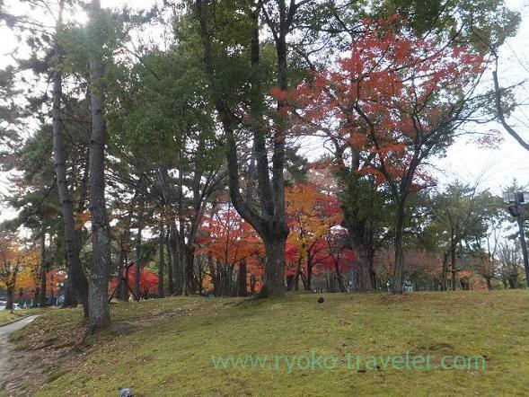 Autumn leaves, Nara Prefecture Culture Hall (Nara)