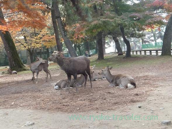 View, Nara Park (Nara)